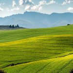 occupational health & safety agricultural sector